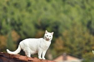 the cat portrait photo