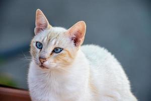 el gato blanco foto
