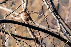 sparrow bird placed on a branch photo