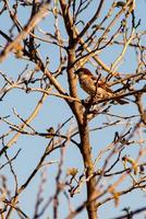 sparrow on the plant photo