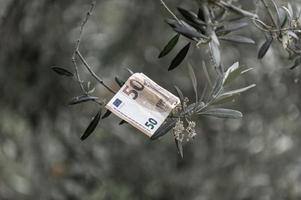 Billete de 50 euros en una rama de olivo foto
