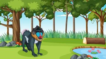 A mandrill in forest at daytime scene with many trees vector