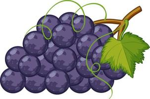 estilo de dibujos animados de uvas moradas aislado sobre fondo blanco vector