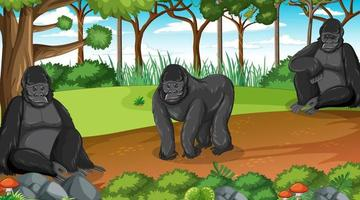Gorilla group lives in forest or rainforest scene with many trees vector
