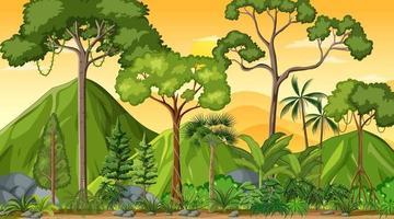 escena del paisaje forestal al atardecer con muchos árboles diferentes vector