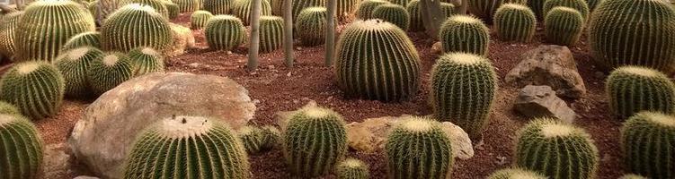 los grupos de cactus en el parque del desierto. foto