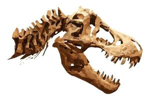 Vector skeleton of Tyrannosaurus rex  T-rex  on isolated background . Skull and Neck .