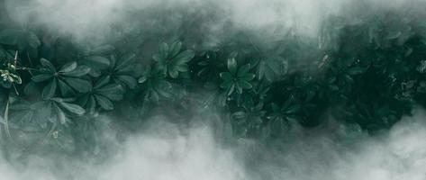 jardín vertical con hoja verde tropical con niebla y lluvia, tono oscuro foto