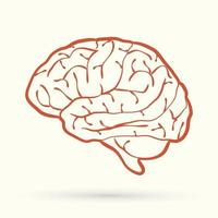 Outline Brain Side View vector