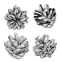 A set of pine cones. Design for Christmas, New Year. hand-drawn vector illustration
