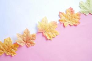 Autumn maple leaves isolated on white background, top down photo