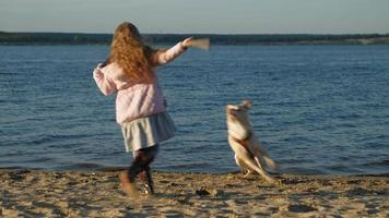 Little Girl Playing with A Brown Dog video