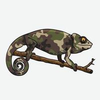 chameleon illustrator vector design template