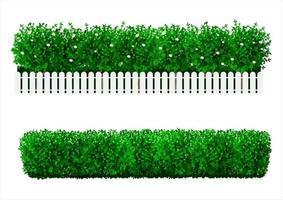 bush hedge set vector