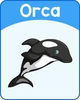 Educational English word card of Orca vector