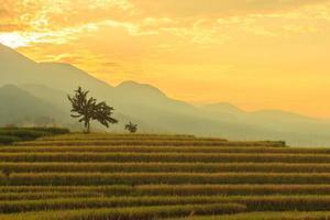 Vista de la mañana en el área del campo de arroz en la montaña con arroz amarillo en un hermoso amanecer foto