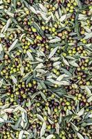 textura de aceituna recién cosechada foto