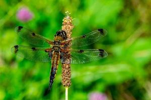 the nature dragonfly photo