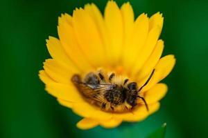 despertares de una abeja foto
