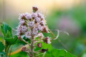 la naturaleza floreciendo foto