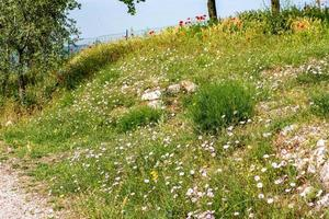 the FLOWERING MEADOW photo