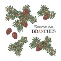 Christmas tree branches vector. vector
