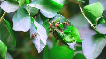 Las avispas estaban construyendo sus nidos en las ramas del jardín en verano. video