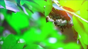 Wespen bauten ihre Nester auf den Ästen im Garten video