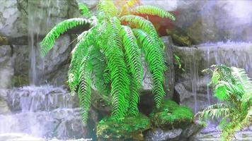 felce verde tra la cascata e la luce del sole in cima video
