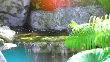 cascata focus backgroud e sfocatura felce verde in primo piano e luce solare video