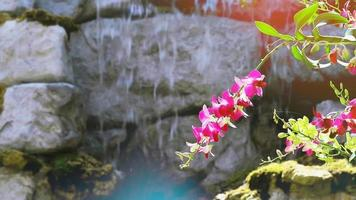 fiore di orchidea magenta che sboccia e foglie verdi gialle e sfocatura dello sfondo della cascata al mattino video