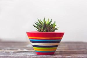 Small succulent plant in colorful ceramic pot against the white wall photo
