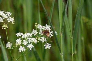 en el prado flores silvestres blancas y mariposas foto