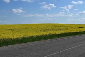 Yellow field by the road photo