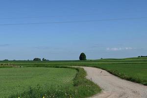 un sinuoso camino de ripio entre campos foto