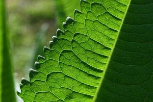 Green leaf structure photo