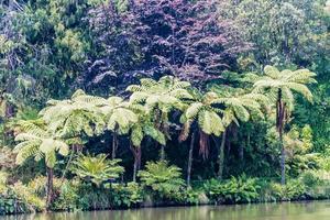 Floral displays in the Pukekura Park botanical gardens. New Plymouth, Taranaki, New Zealand photo