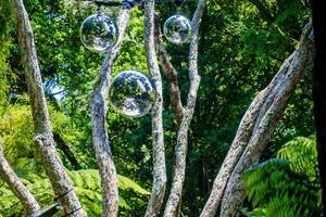 A strole through the Pukekura Park botanical gardens. New Plymouth, Taranaki, New Zealand photo