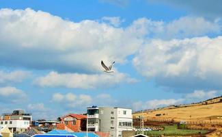 Bird in flight, Jeju island, South Korea photo