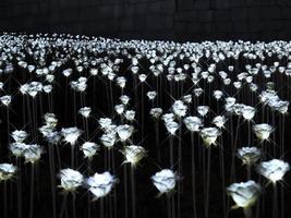 flor de luz en el parque de la ciudad de seúl. corea del sur, invierno 2017 foto