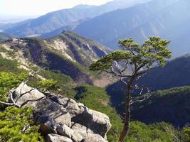 Mountain pine-tree and the great view to korean mountains Seoraksan photo