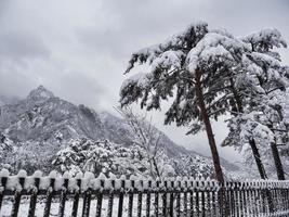 Korean pine tree under the snow and big mountains on the background. Seoraksan National Park, South Korea. Winter 2018 photo