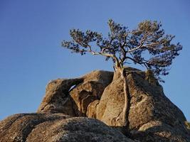 Mountain pine tree on the peak of Seoraksan mountains photo