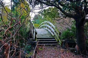 The bridge in the forest of Jeju island, South Korea photo