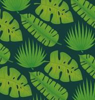 tropical leafs palms vector