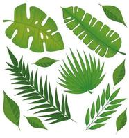 leafs palms pattern vector