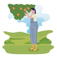 farmer female cultivating oranges in the camp vector