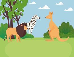 zebra with lion and kangaroo animals wild vector