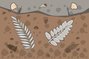 Underground soil with fern leaves fossils vector
