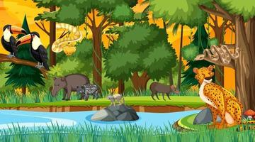 Forest at sunset time scene with different wild animals vector